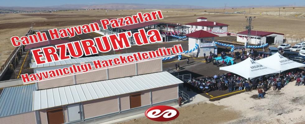 Canlı Hayvan Pazarları Erzurum'da Hayvancılığı Hareketlendirdi